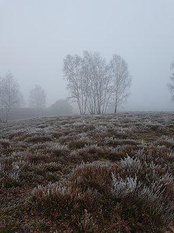 Tree, Fog, Foggy, Nature, Msnature
