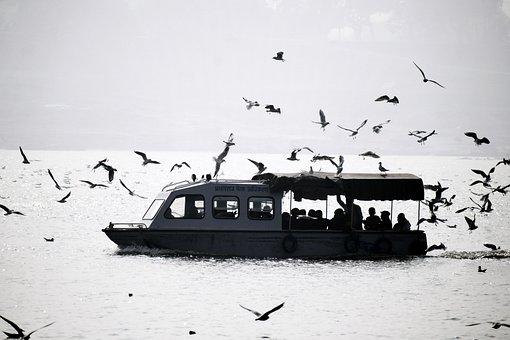 Boat, Seagulls, Ganga, Seagull, Water, Ship, Lake