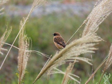 Animal, Grass, Bird, Wild Birds