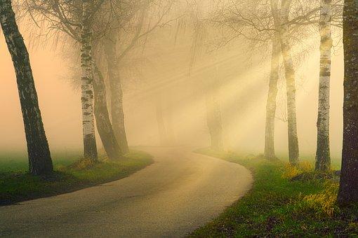 Away, Avenue, Sunbeam, Fog, Haze, Warm, Rays, Light