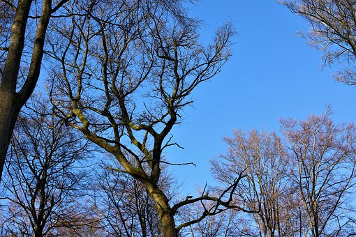 Canopy, Sky, Blue, High, Aesthetic, Tribe, Forest