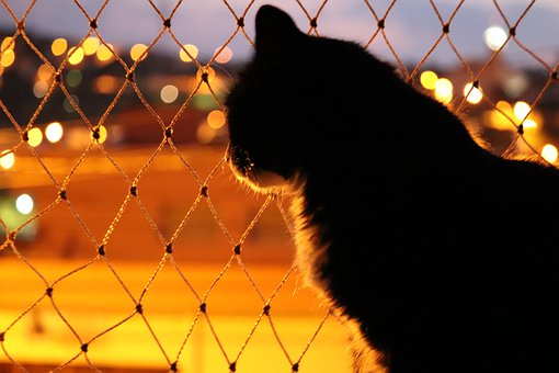 Cat, Night, Screen, Kitten, Dark, Animal