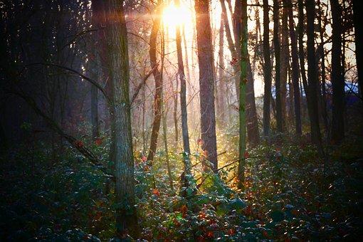 Mystical, Forest, Trees, Sunlight, Vote, Landscape