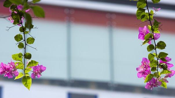 Pink, Leaf, Flower, Bloom, Rose, Blossom, Nature, Plant