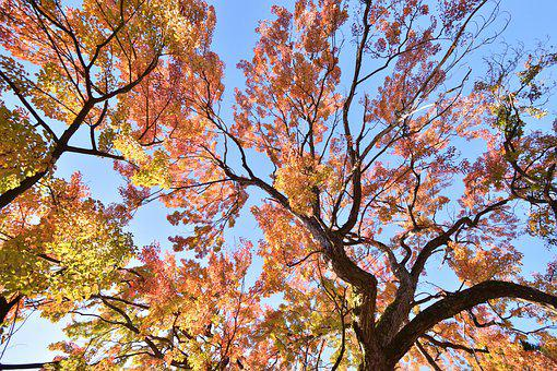 Autumn, Leaves, Forest, Nature, Tree, Colorful, Leaf