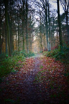 Forest, Forest Path, Vote, Path, Light, Distance, Trees