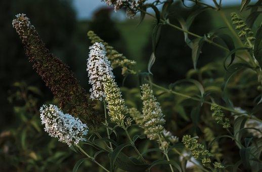 Garden, Summer, Flowers, Nature, Plant, Floral, Bloom