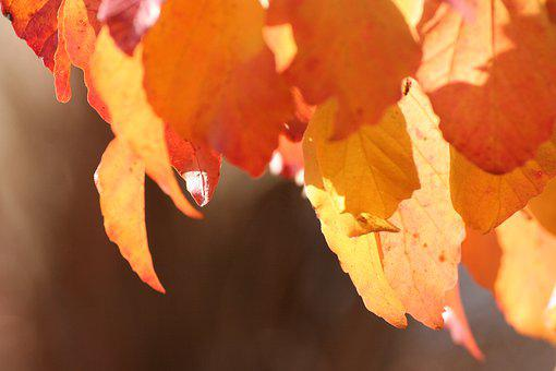 Leaves, Sun, Yellow, Forest, Autumn, Nature, Tree