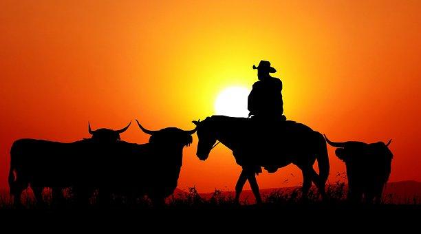 Sunset, Nature, Cows, Western, Orange, Scenic, Twilight
