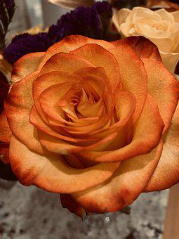 Flower, Plant, Nature, Blossom, Bloom, Blue, Flora