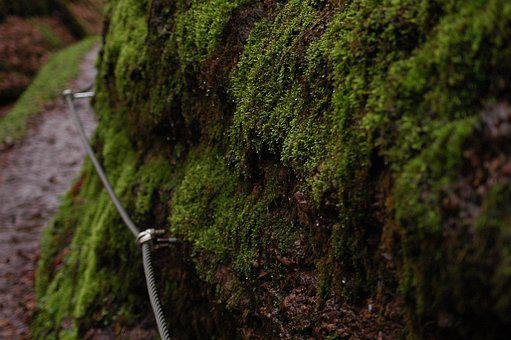 Moss, Bach, Slope, Nature, Forest, Water, Drop Of Water
