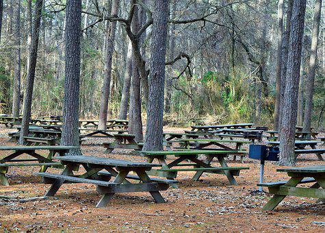 Picnic, Bench, Park, Nature, Table, Wooden