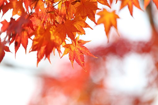 Autumn, The Leaves, Autumn Leaves, The Shining, Red