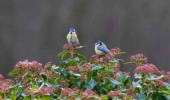 Blue Tit, Feeding Tit, Tit, Small Bird, Garden Bird