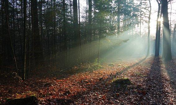 Fog, Light, Shadow, Romantic, Nature, Veluwe, Trees