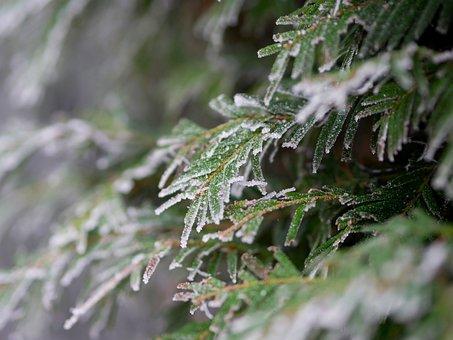 Winter, Hoarfrost, Frost, Frozen, Cold, Winter Magic