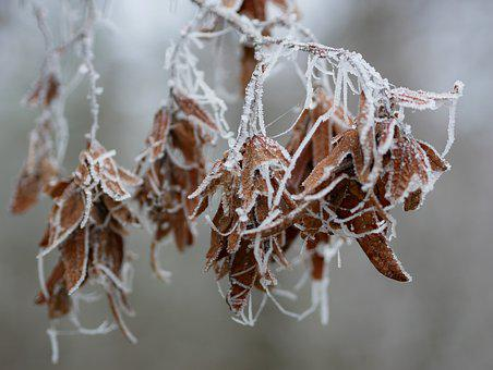 Winter, Hoarfrost, Frost, Frozen, Cold, Winter Magic