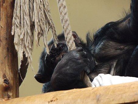 Monkey, Animal, Zoo, Animal World Of, Mammals, Nature
