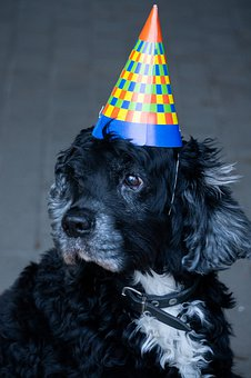 Dog, New Year, Silvester, Cute, Pet, Party, 2020