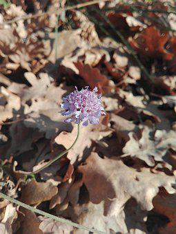 Flower, Leaves, Autumn, Winter, Violet, Shallows