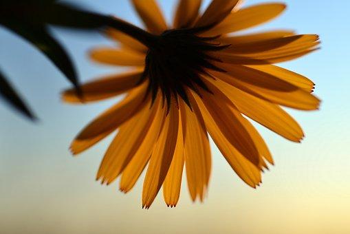 Flower, Yellow, Blossom, Bloom, Flora, Petals, Beauty