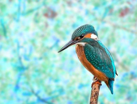 Kingfisher, Bird, Bokeh, Nature, Animal, Sitting
