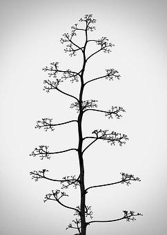 Mood, Sad, Tree, Branch, Alone, Black And White