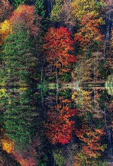 Autumn Trees, Water, Reflection, Plant, Bush, Tree