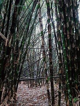 Indonesia, Bamboo, But, Asia, Bali