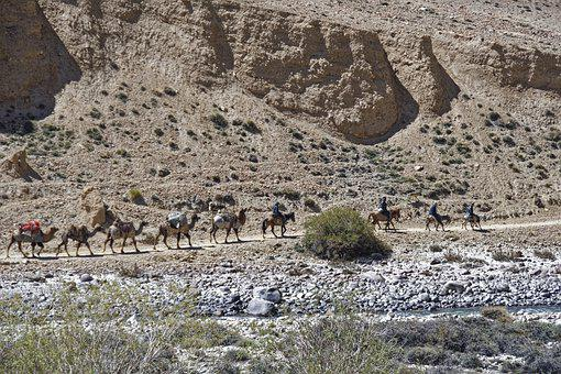 Caravan, Dromedaries, Animals, Camels, Desert Ship