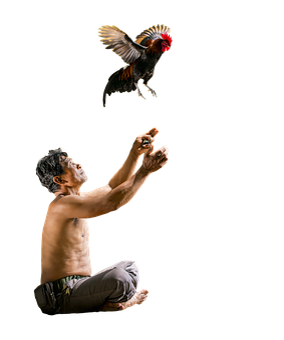 Man, Thai, Chicken, Isolated, Transparent, Sit, Catch