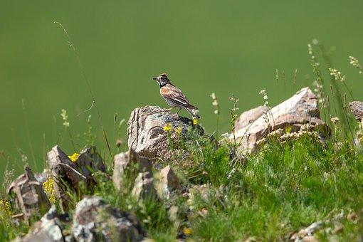 Creature, Wild Birds, Little Bird, Khar Yamaat Mountain