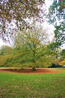 Autumn, Tree, Fall Foliage, Autumn Colours