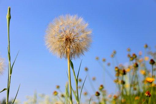 Flower, Cute, Farm, Country, Cheerful, Green, Grass