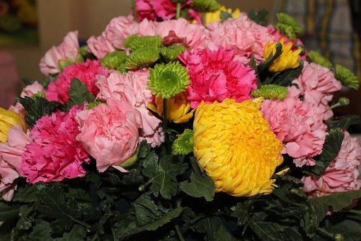 Flowers, Chrysanthemum, Plant