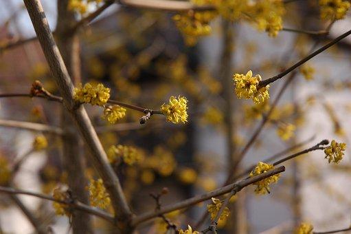 Spring, Blossom, Bloom, Nature, Garden, Plant, Flowers