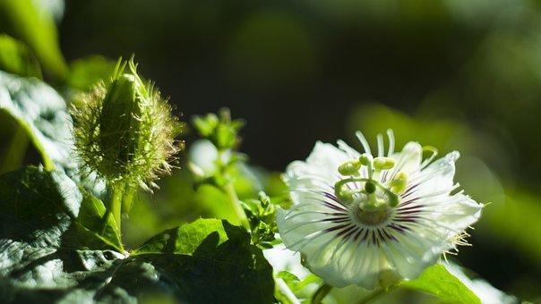 White, Flowers, Spring, Garden, Bloom, Plant, Blossom