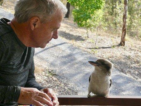 Kookaburra, Interaction, Chat, Listen, Talk