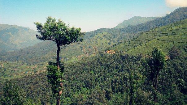 Munnar, Kerala, India, Tea, Nature, Green, Landscape