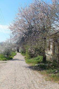 Crimea, Kerch, Spring, Street, Trees, Nature