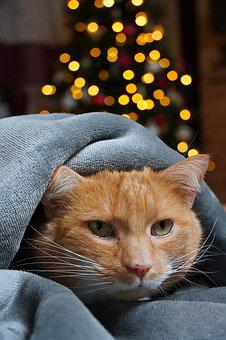 Cat, Pet, Anxious, New Year's Eve, Love For Animals