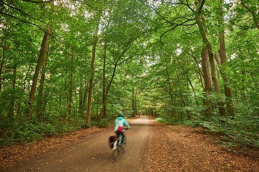 Hanover, Eilenriede, Lower Saxony, Park, Stadtwald