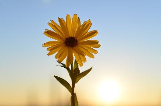 Flower, Yellow, Blossom, Bloom, Sun, Flora, Petals