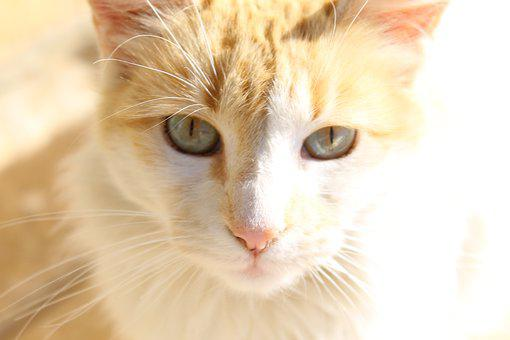 Cat, Yellow, Looks, Façade, Kitten, Domestic Cat, Pets