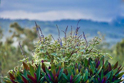 Plant, Flowers, Garden, Bloom, Purple, Petals, Flora