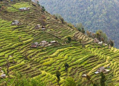 Landscape, Rural, Fields, Rice Terraces, Terraces
