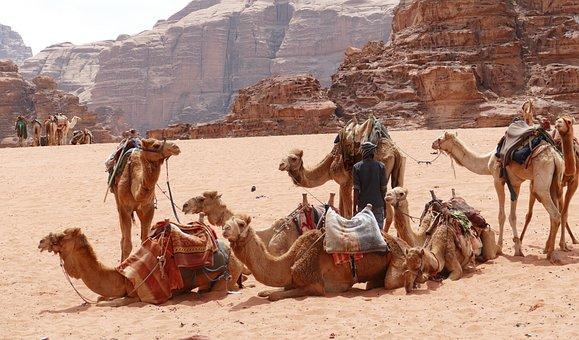 Jordan, Wadi Rum, Desert, Sand, Wadi, Camel, Caravan