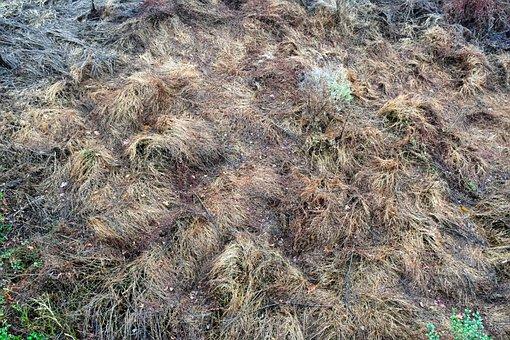 Weed, Scruff, Dried, Wetland, Swamp, Nature, Outdoors