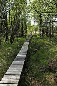 Wooden, Boardwalk, Path, Swamp, Nature, Mood, In