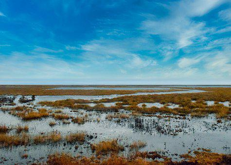 Scenic, Wetland, Swamp, Nature, Outdoors
